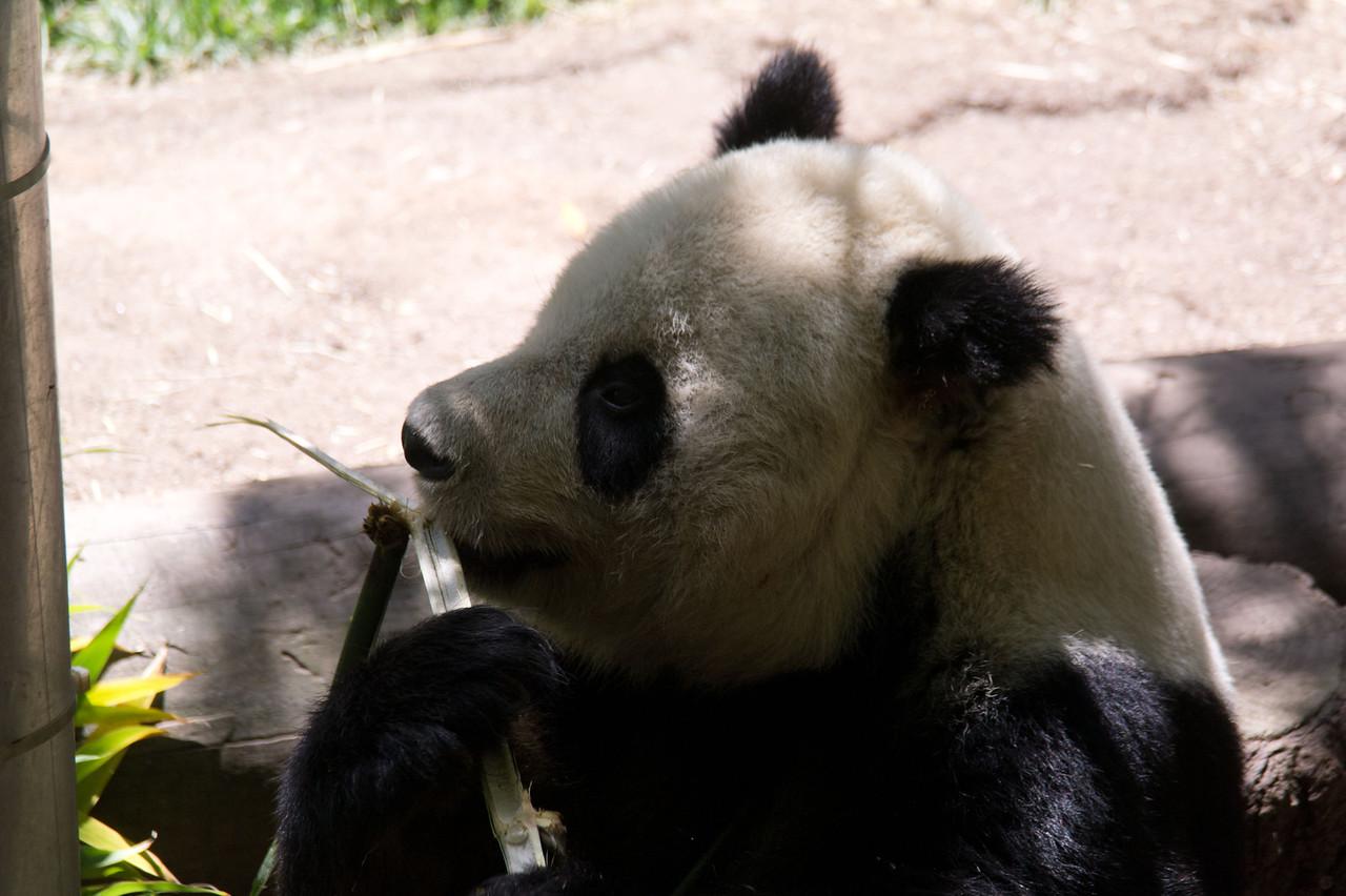 1127 Panda