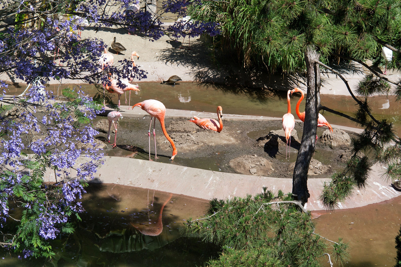 1142 Flamingos