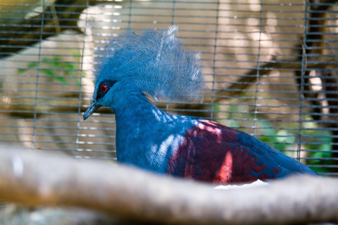 1130 Bird