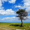Tree overlooking Mare Ruggero - Sellia Marina, Italy