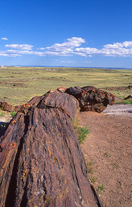 Petrified log.  Petrified forest NP, Arizona.