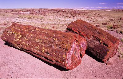 Petrified logs.  Petrified Forest NP, Arizona.