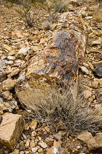 Petrified log.  Valley Of Fire SP, Nevada.