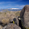 Petroglyph.  Three Rivers,  New Mexico.