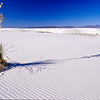Yucca on a sea of sand.  White Sands NP, white sands, New Mexico.