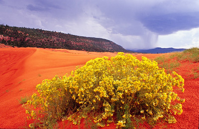 "Twink said ""were a long ways from the truck and looks like it could rain"".  I replied,  ""don't worry, the storm is miles away"".  Just as I said ""away"", it began to pour.  Coral Pink sand dune, Utah."
