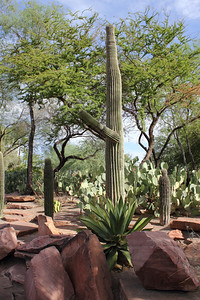 More desert landscaping  - at a cactus botanical garden in Las Vegas. September 2011.