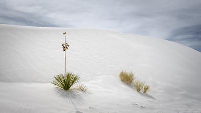 Life in a Desert