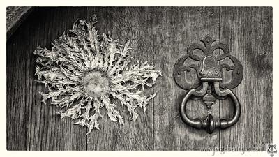Eguzkilore (flor del sol)
