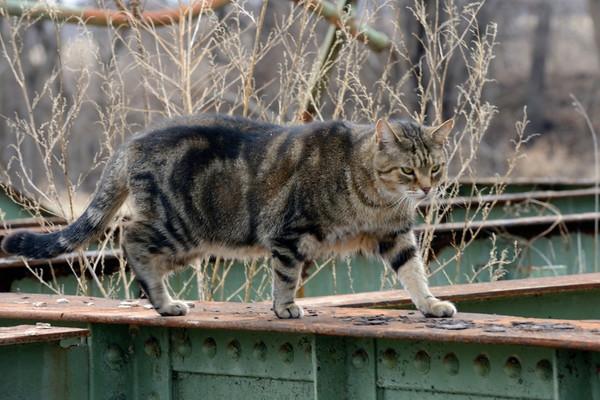 Cat walking the old Sperryville bridge.