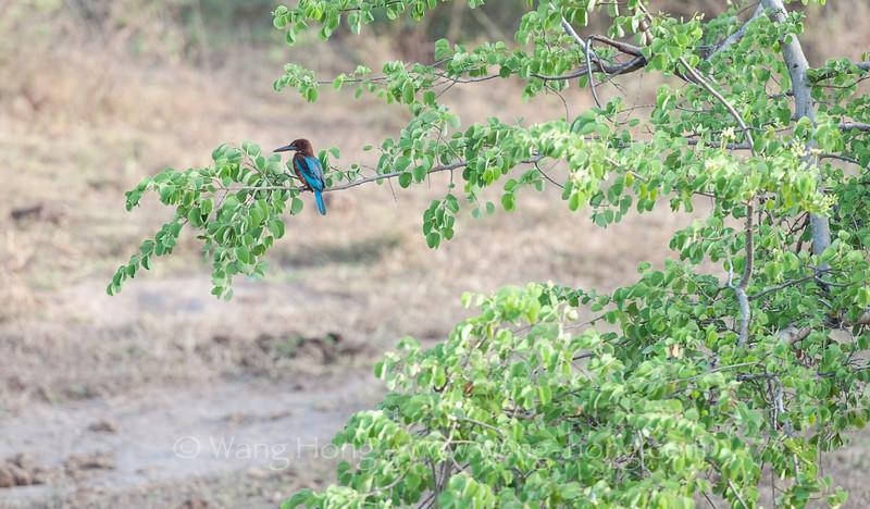 In Uda Walawe National Park.