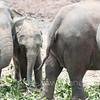 At Pinnawala Elephant Orphanage.
