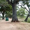 In Anuradhapura.