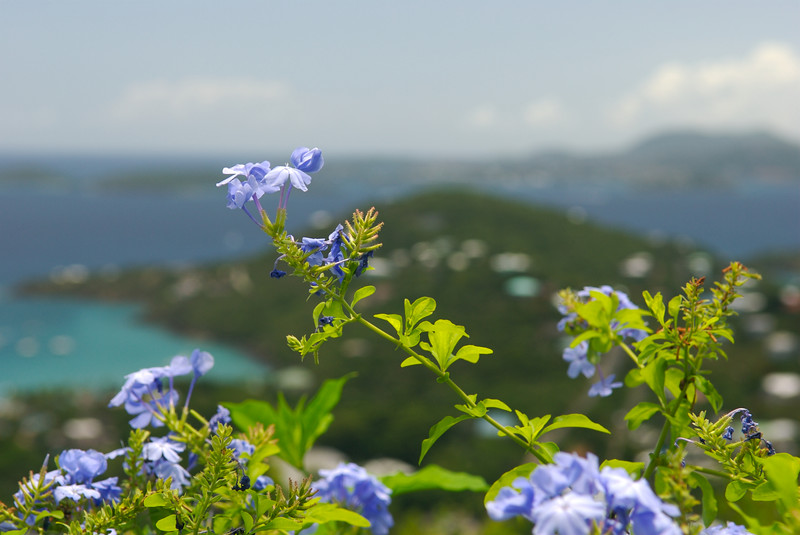 Flowers with a view