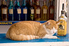 The people on the island are real good to their pets. Unfortunately, this has led to a high incidence of alcoholism in cats.