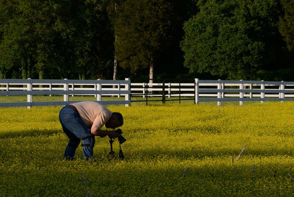 Fellow photographer shooting buttercups.