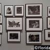 St. Petersburg Museum of Fine Arts, St. Petersburg, Florida - 22nd August 2015  (Photographer: Nigel G Worrall)
