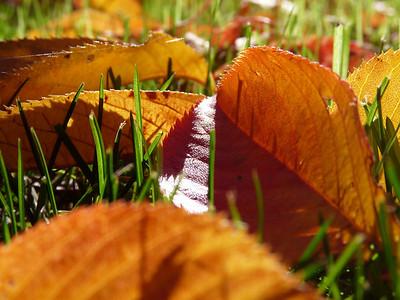 California Fall