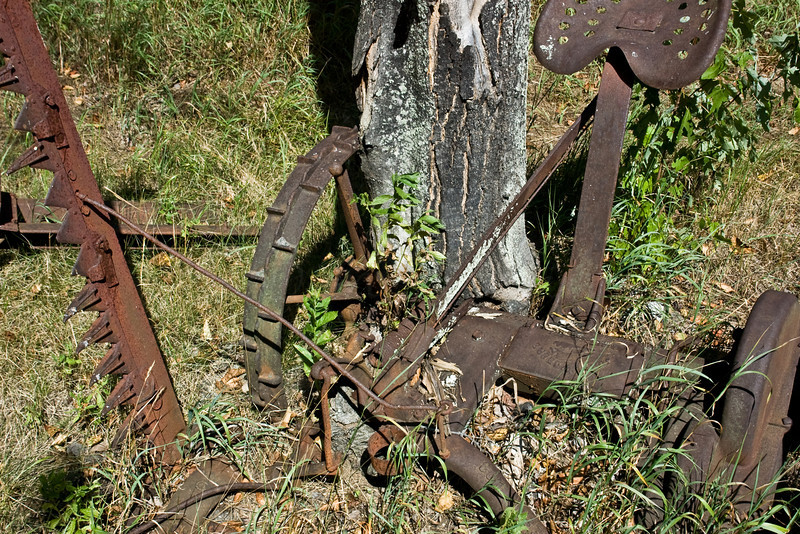One not in the Old Farm Equipment Graveyard.<br /> <br /> A Maple grew up around it.