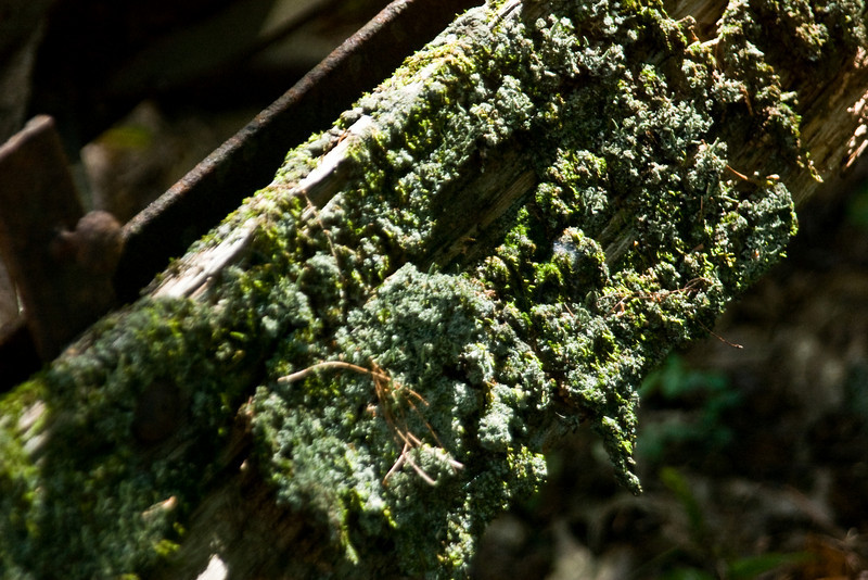 Mossy buggy board close-up.