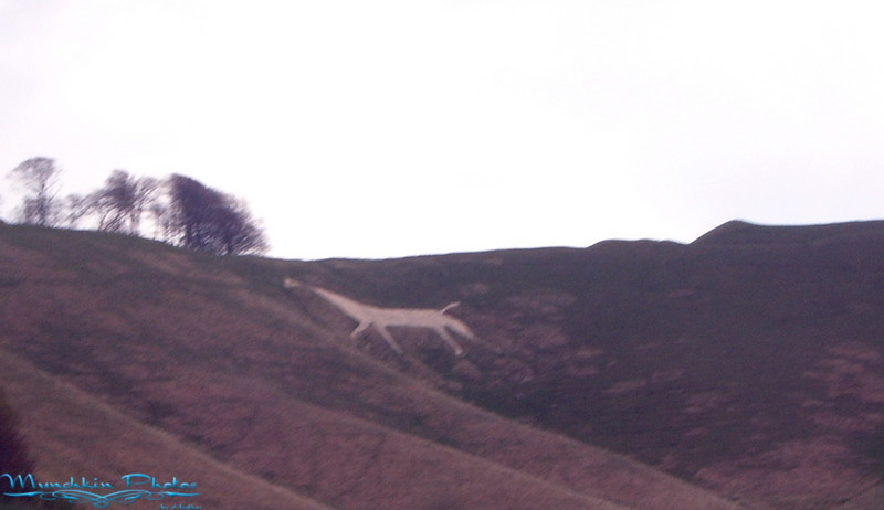The white horse. There are 13 of them.