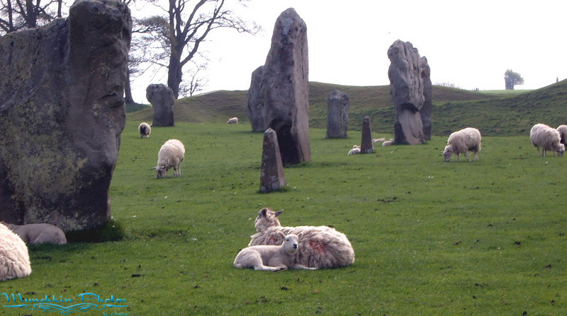 More sheep and Stones.