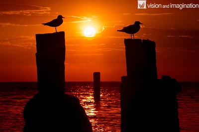 IMG_9140_Amity Point_Stradbroke Island