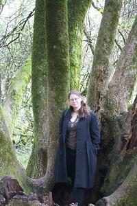 Redwoods in Muir