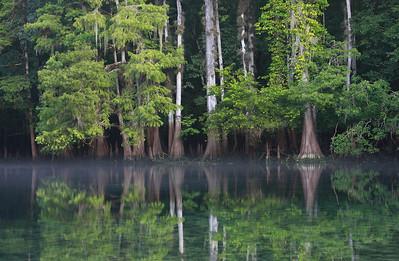 Manattee Springs Bayou 12