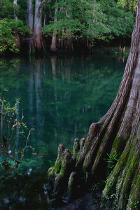 Bayou at Manatee Springs State Park, Florida (RAW edited in GIMP - no EXIF)