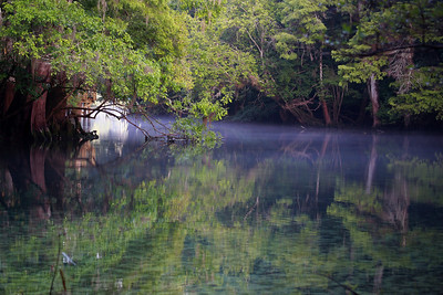 Manatee Springs Bayou 10