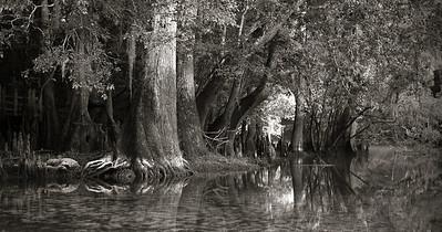 Manatee Springs Bayou 14 BW
