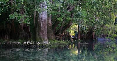 Manatee Springs Bayou 14