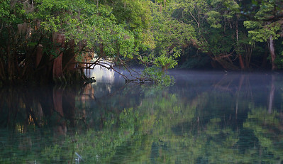 Manatee Springs Bayou 11