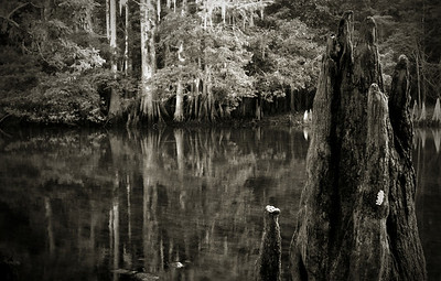 Bayou at Manatee Springs State Park, Florida