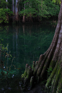 Bayou at Manatee Springs State Park, Florida (RAW edited in Canon Digital Studio)