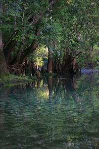 Manatee Springs Bayou 13