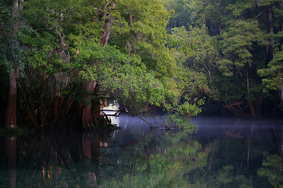 Manatee Springs Bayou 09