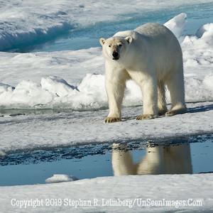 Bear Reflection 110816_4200