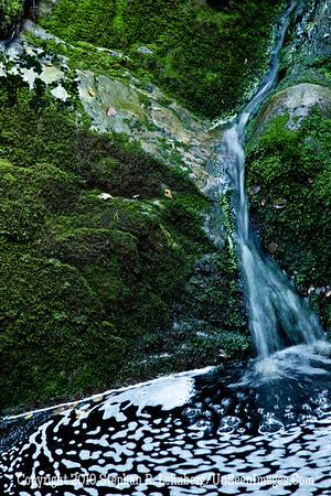 Green Waterfall Close-Up Waterfall and Mushroom_110824_9001