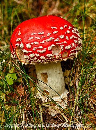 Red Mushroom Waterfall and Mushroom_110824_9097_HDR