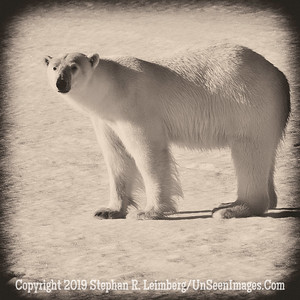 Sepia Bear 110816_4327