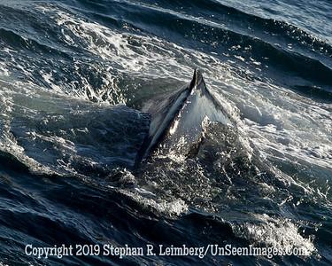 Whale 110817_5755
