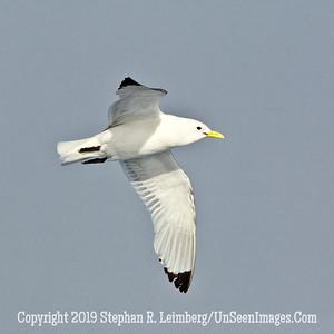 Bird 110816_3987