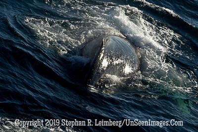 Whale 110817_5750