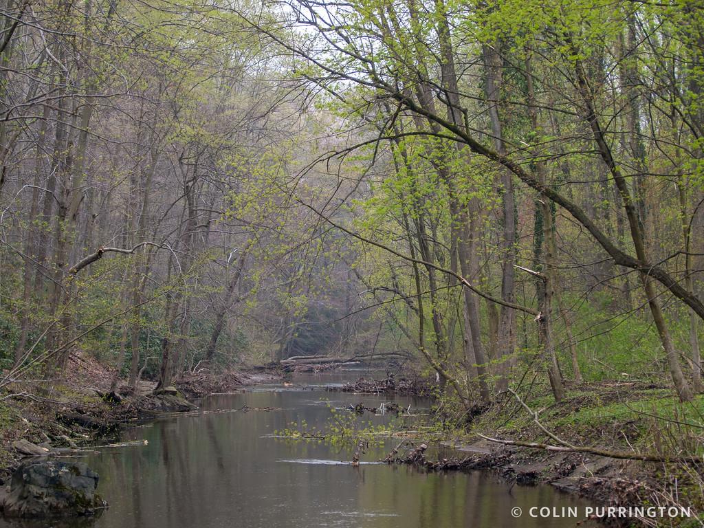 Crum Creek in spring