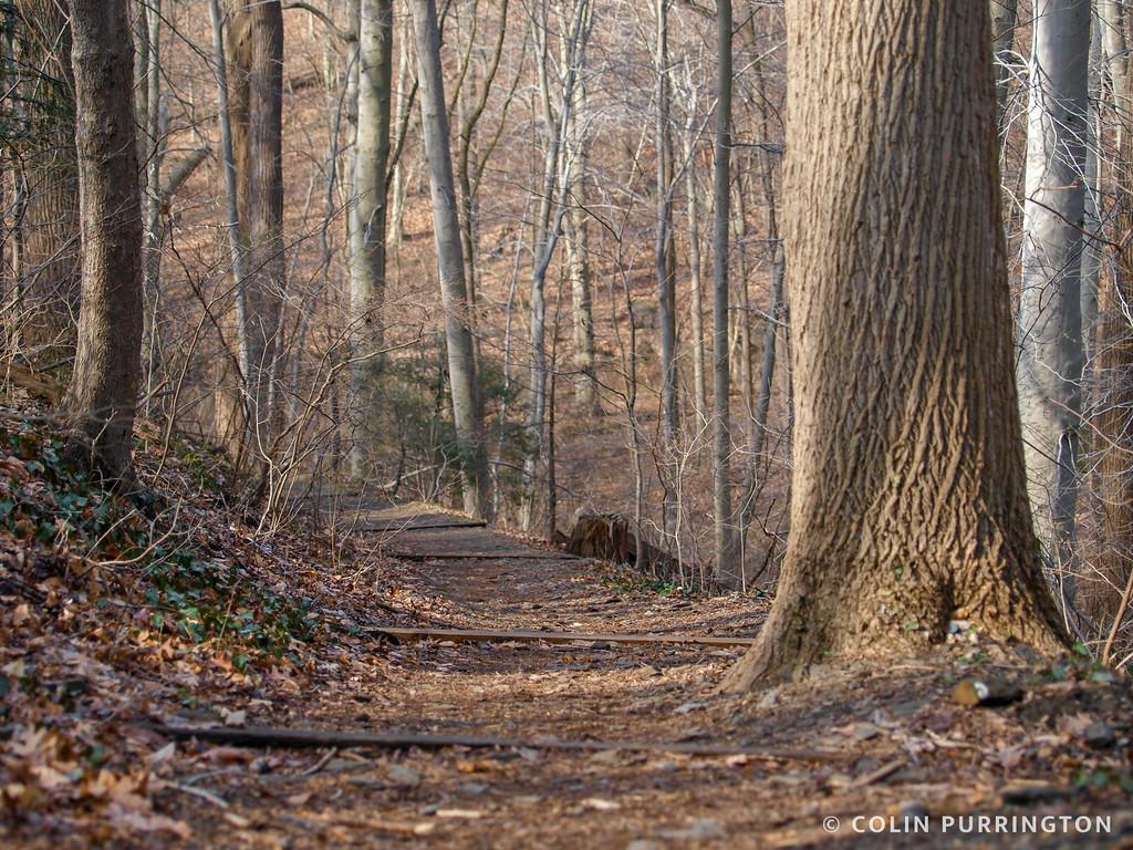 Path in Crum Woods