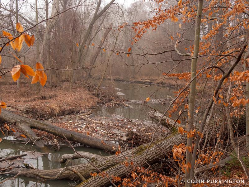 Log jam in Crum Creek