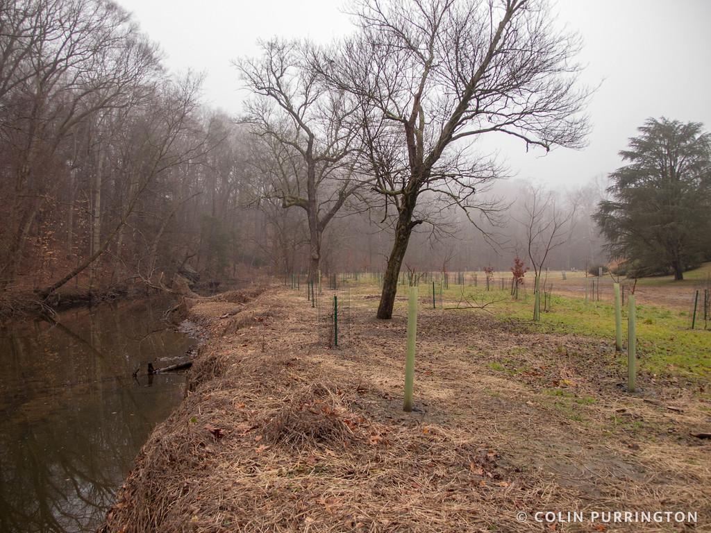 Crum Creek riparian plantings
