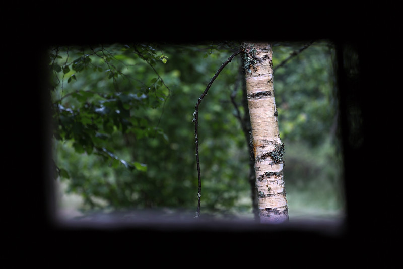 Beautiful Birch Bark